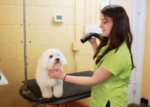 Pet Stylist, Hollie Dennison at Canine Country in Statesville, NC