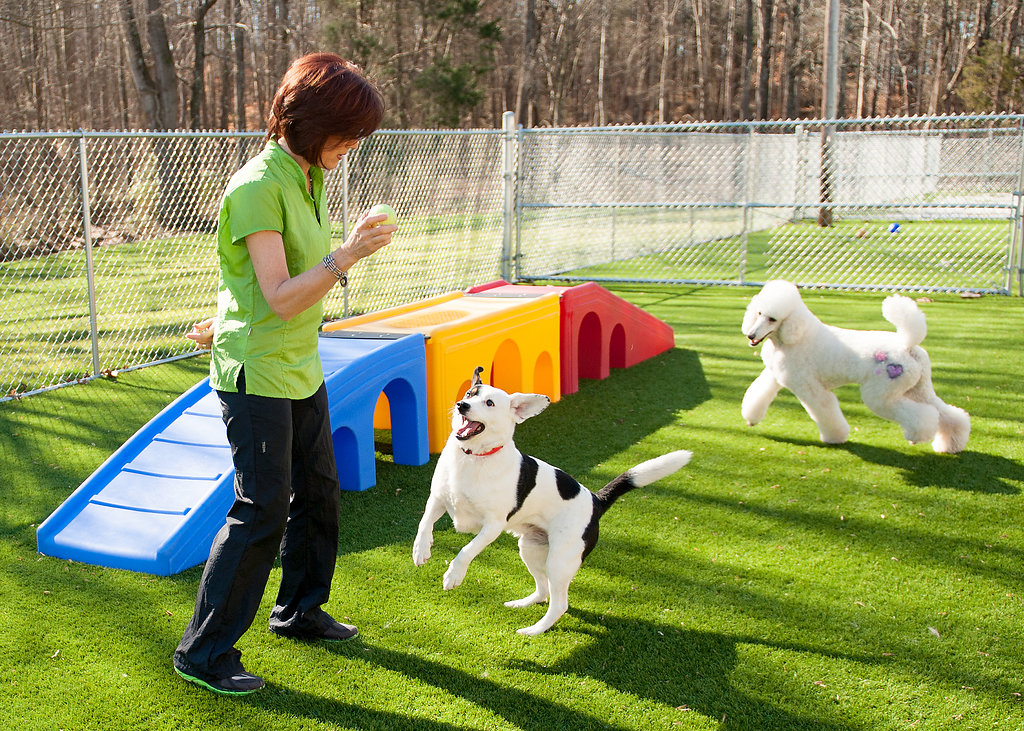 Canine Country in Statesville, NC