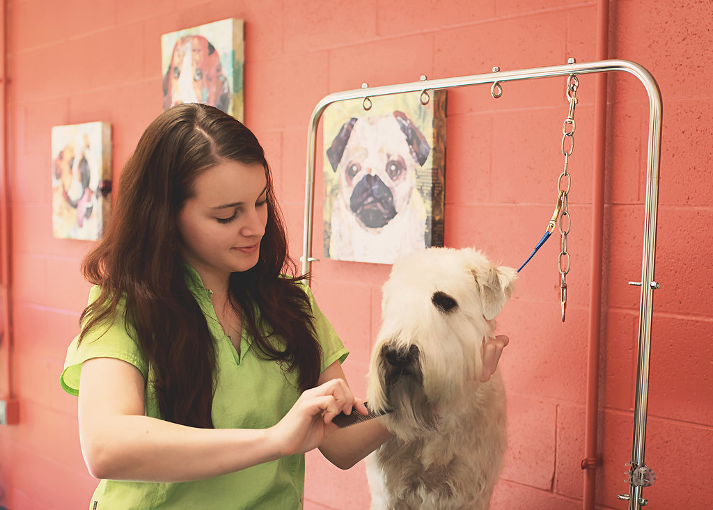 Holly Kennison, Assistant Pet Stylist - Pet Stylists at Canine Country in Statesville, NC