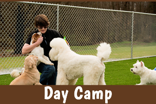 day-camp-sub