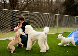 Statesville Dog Grooming, Day Camp and Boarding