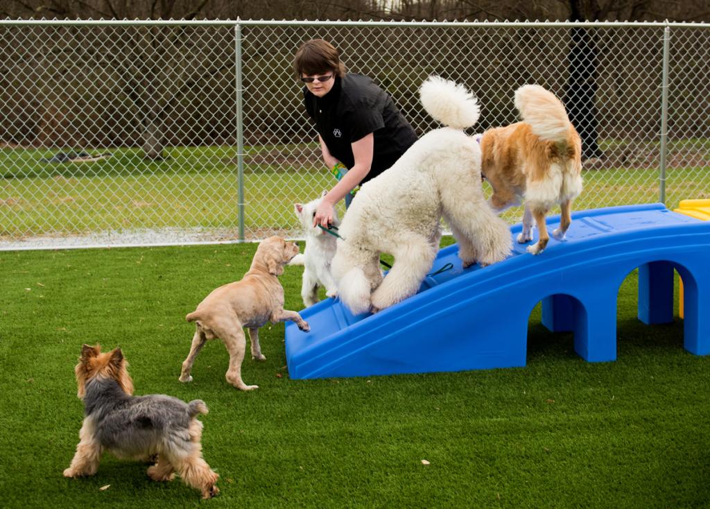 dog-groomer-statesville-nc2136