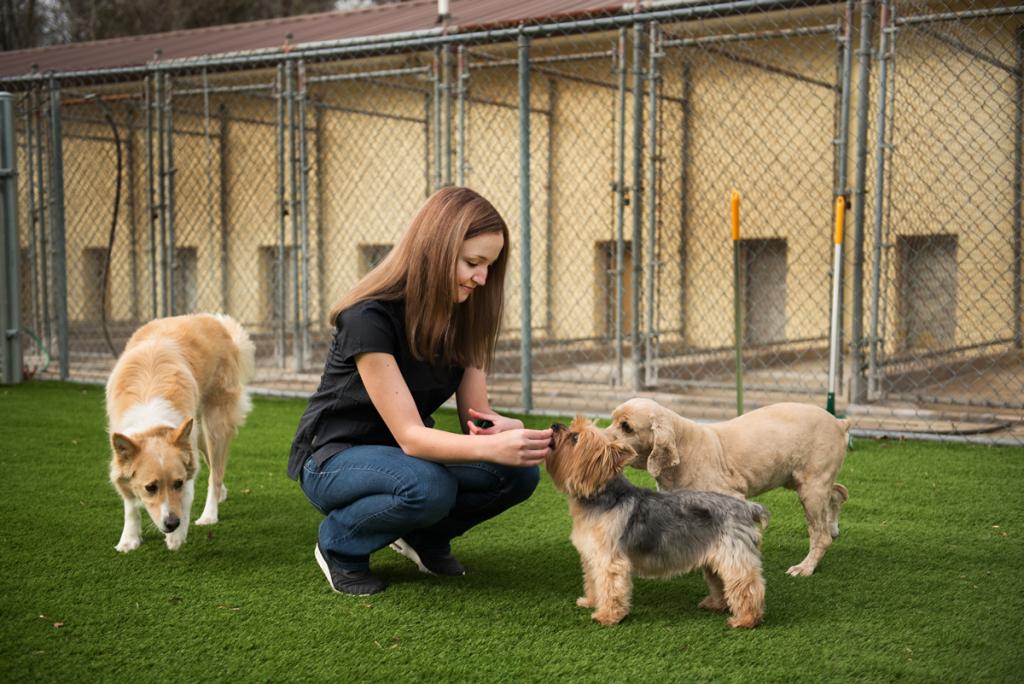 dog-groomer-statesville-nc2159
