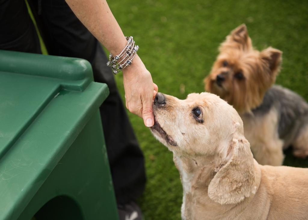 dog-groomer-statesville-nc2283