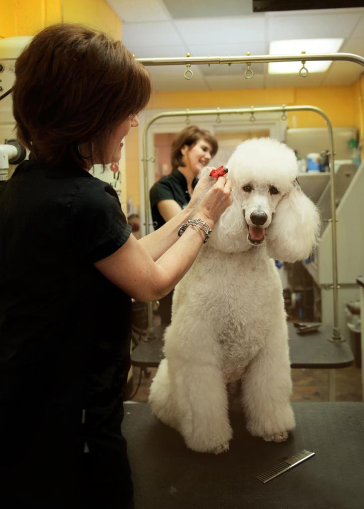 dog-groomer-statesville-nc2343