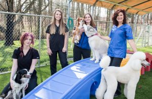 Canine Country in Statesville, NC for Grooming and Boarding